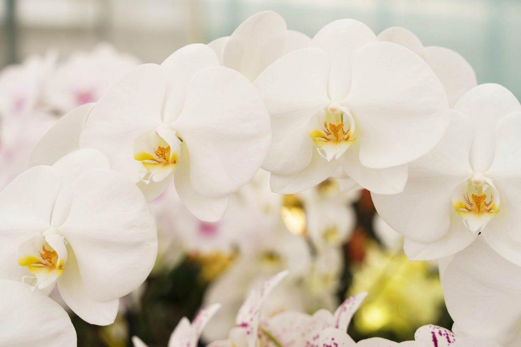 Hark Orchideen - Krankheiten
