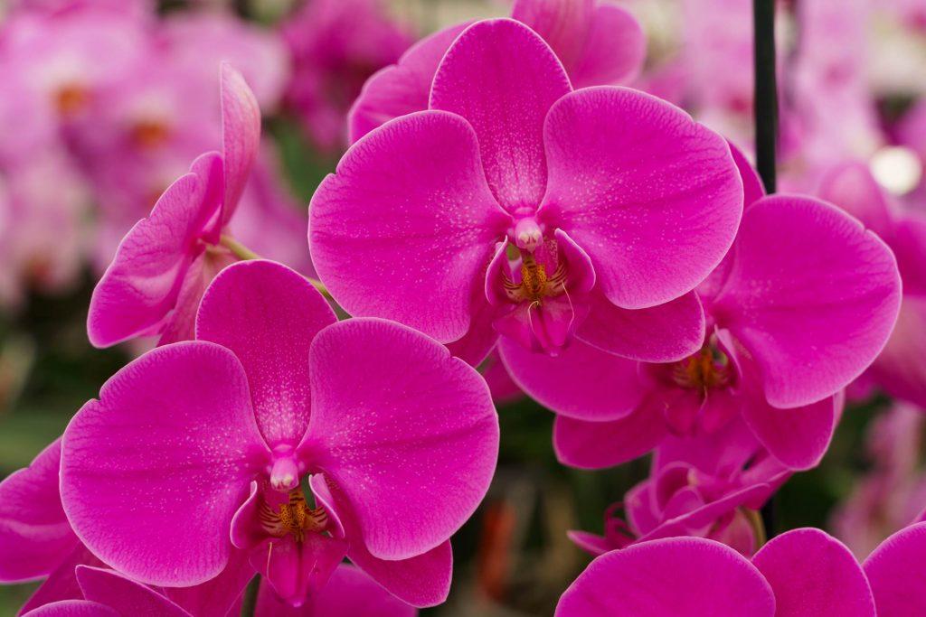 Hark Orchideen - Produkte